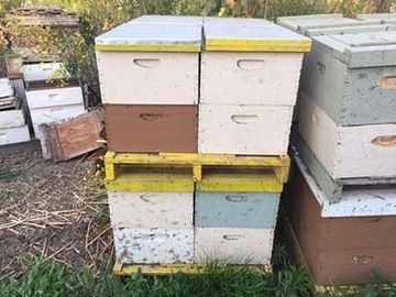 Stolen Beehives Located