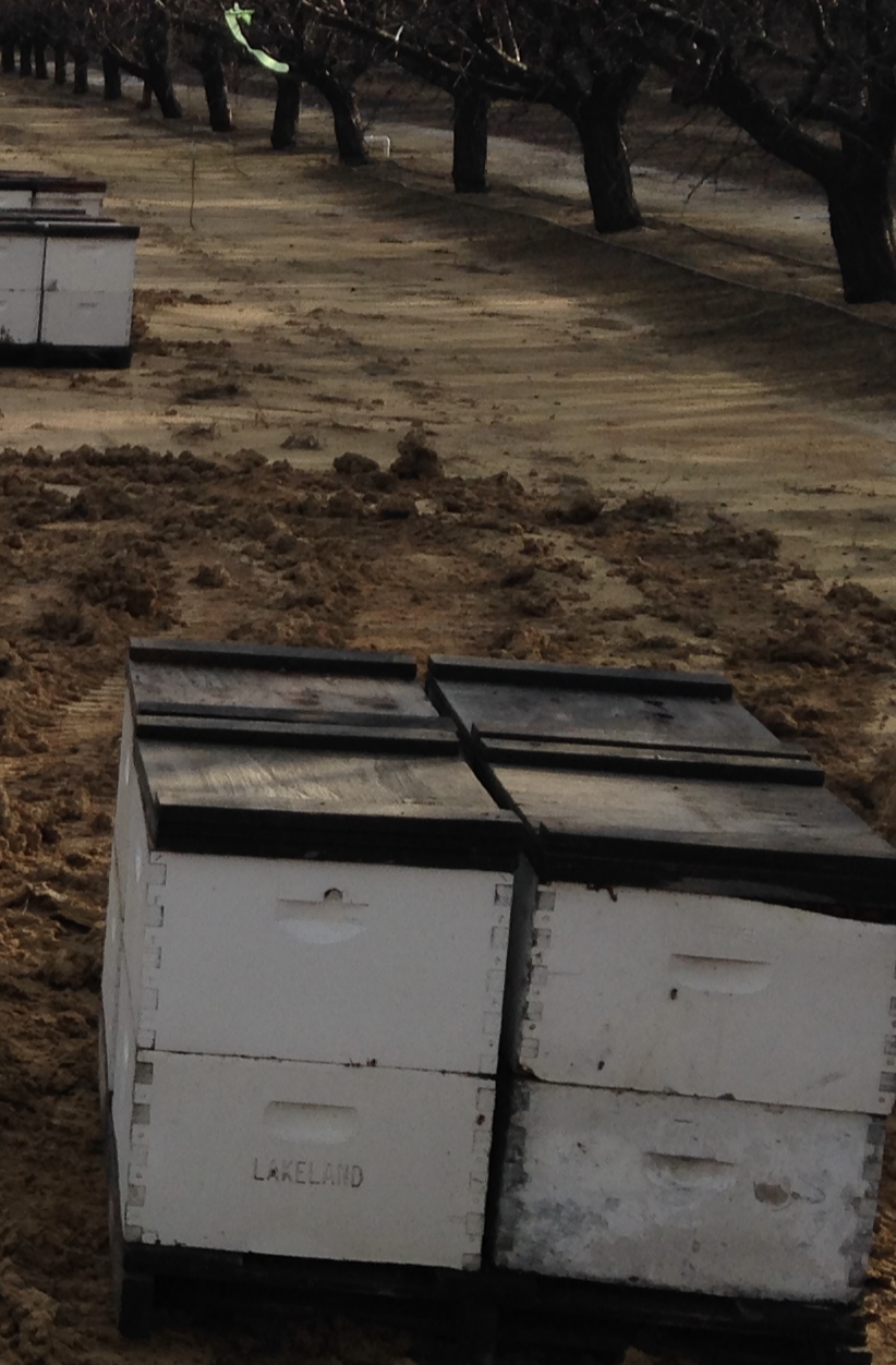 Hive Theft in Southern Madera County